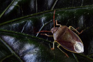 How to Get Rid of Spittlebugs