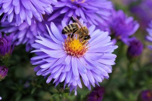 What Flowers Don't Attract Bees