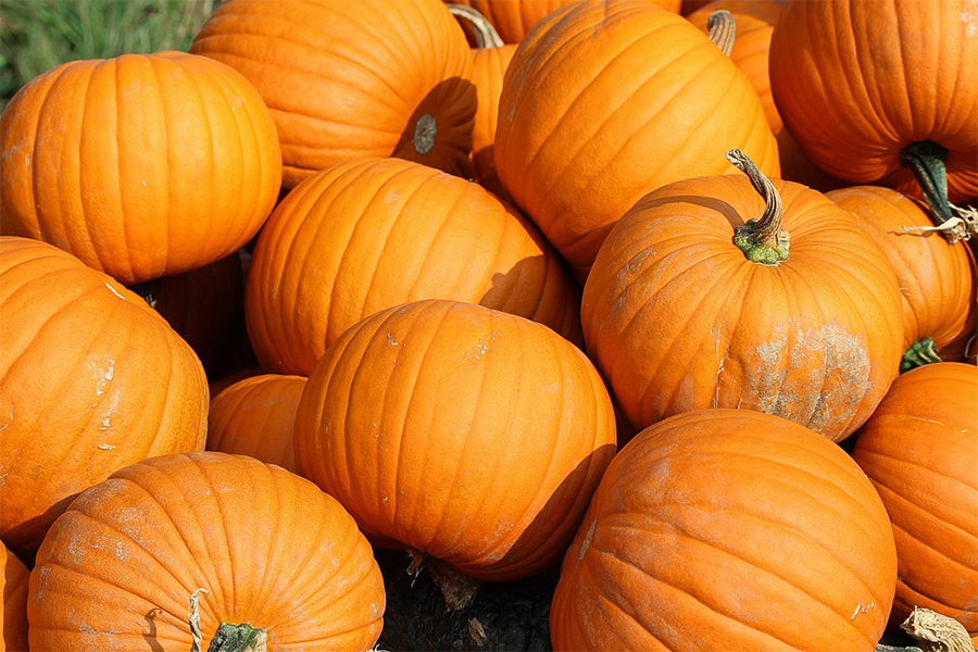 How Long do Pumpkins Last Off the Vine
