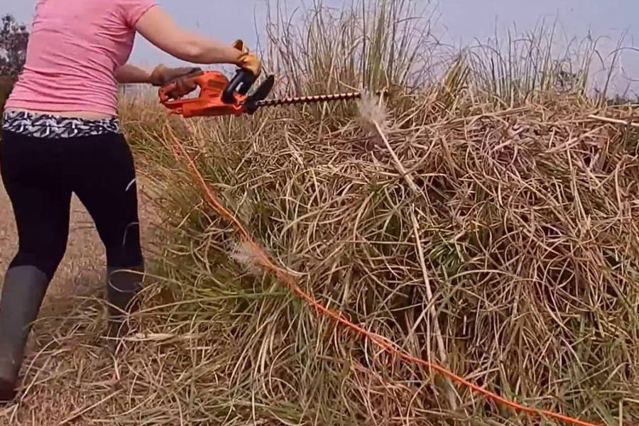 How to Control Pampas Grass