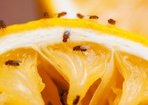 3 Ways to Get Rid of Fruit Flies