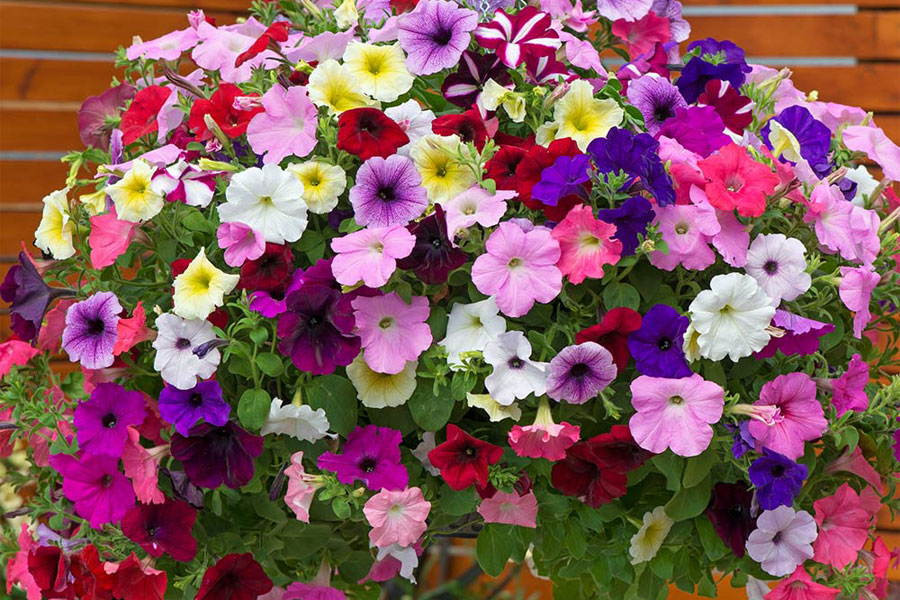 10 Best Flowers to Plant for Allergy Sufferers