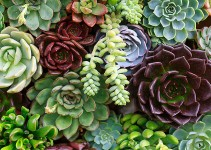 How to Best Care for Succulents